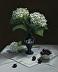 White Hydrangeas, Black Cherries by Jeanne Leemon