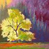 Cook Meadow Elm