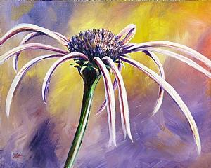Kansas Wildflower Series