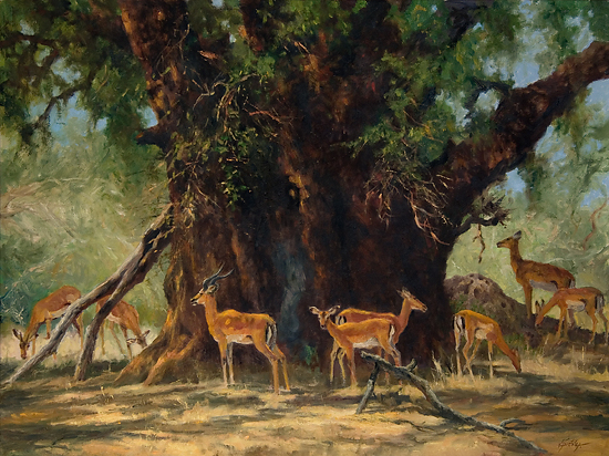 DSC_0009 Beneth the Nyala Tree cc 40 x 30  8 x 10 72 dpi - Oil