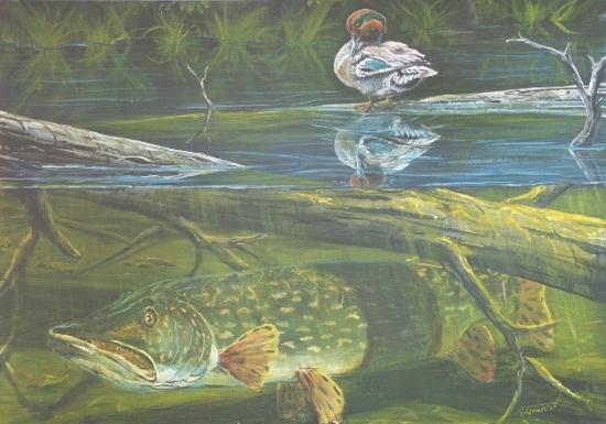 Omaž ribolovcu i ribolovu - Page 6 Teal-meal-northern-pike-painting