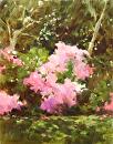Pink Azaleas by Karen Meredith Oil ~ 14 x 11
