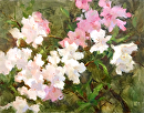 Azalea Dream by Karen Meredith Oil ~ 11 x 14