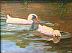 Ducks by Jill Quadagno