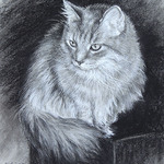 Nicole Troup - Pet Portrait and Animal Drawing Workshop