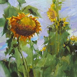 "Travis's Sunflowers  12"" x 12"" oil"