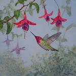 Floy Zittin - Watercolor Explorations