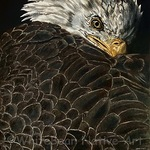 Kathy S. Copsey - ENDANGERED Online! Fine Art & Photography Contest