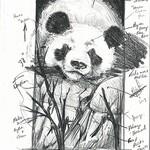 Duke Windsor - Beginning Drawing Bootcamp--Six Weeks