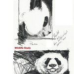 Duke Windsor - Drawing for Beginners