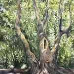 Kathy Rennell Forbes - Painting Trees in Watercolor