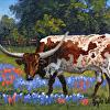 Texas Mascot II