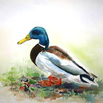 Valerie Borgal - Monhegan Island Watercolor Exhibit