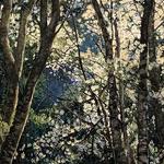 Britt Block - Pastel Artists of Oregon