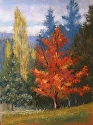 Maple Blaze by Janis Ellison Pastel ~ 12 x 9