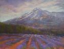 Fields of Lavender by Janis Ellison Pastel ~ 11 x 14