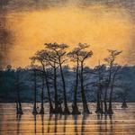 Sandy Burr - Wesleyan Artist Market