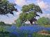 Bluebonnet Pasture by Noe Perez