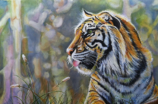Sumatran Tiger - Oil